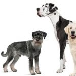 The largest dog breeds in the world
