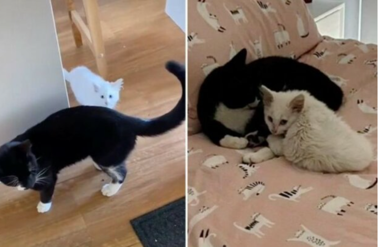 The cat brought a homeless friend home and shared food with him. And leaving the family homeless