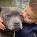 The dog always comes up to the boy, stands on his hind legs and hugs him: mom has shared recordings of their friendship